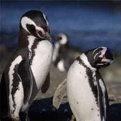 Смотреть китов и пингвинов