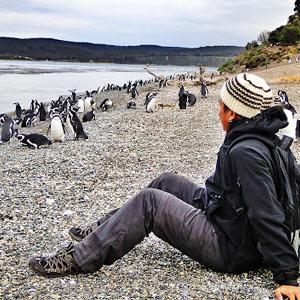 Гулять с пингвинами